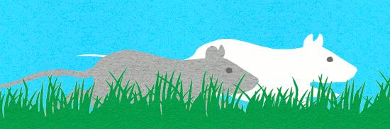 la prophétie des rats 3 web